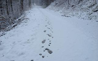 雪天行竊留清晰腳印 美國兩笨賊被輕鬆抓獲