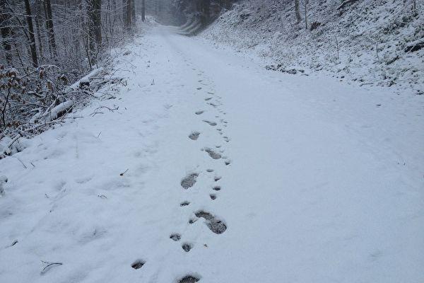 雪天行窃留清晰脚印 美国两笨贼被轻松抓获