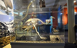 新西兰施工队意外挖出已灭绝的恐鸟骨骼