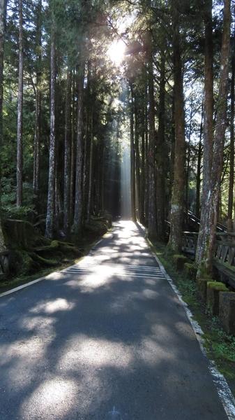 組圖:台灣阿里山森林斜射光及雲隙光之美