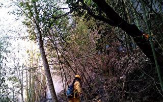阿里山森林大火延燒逾30小時 終獲控制