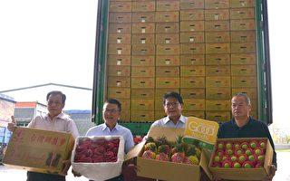 屏东凤梨外销新加坡 年销量估达500公吨