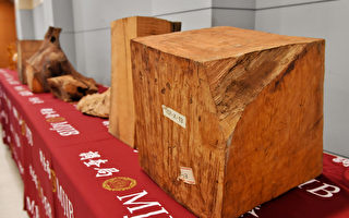 山老鼠難再逃 調查局開發檜木DNA鑑定系統