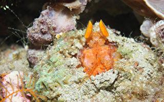 海洋公民计划征集照片 保护水下生物多样性