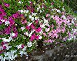 台湾古典诗:春满校园