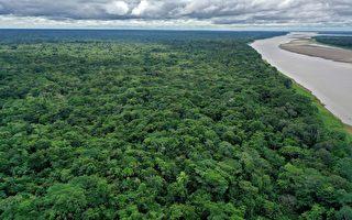 迫降亚马逊丛林受困36天 巴西机师奇迹逃生