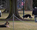 白宮牧羊犬「冠軍」去世 總統和第一夫人悼念