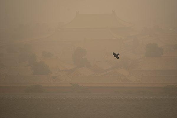 今天(3月15日),北京市被漫天黄沙笼罩,空气污染已达严重污染水平。图为3月15日一直乌鸦飞过北京故宫紫禁城。(WANG ZHAO/AFP via Getty Images)