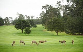 野生动物保护区呼吁游客停止喂鹿