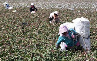 禁用新疆棉引发抵制 专家:中共损失大难持久