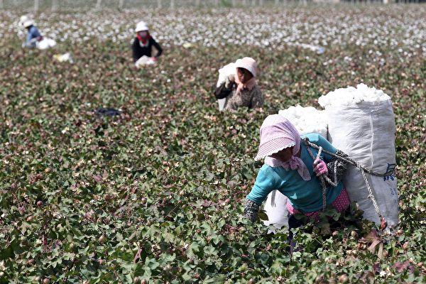 意大利潮牌Benetton和OVS挺人权 拒新疆棉