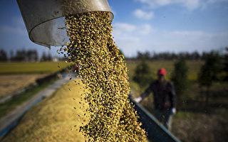 針對中共? 日本禁止兩千種種子攜帶出境