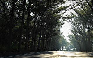 新诗:行道树