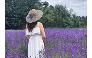新诗:紫色的梦