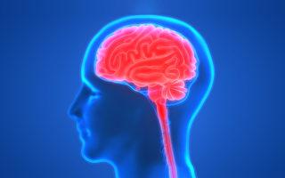 怎样益智健脑,增强记忆力?(Shutterstock)