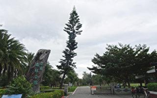 享受大自然疗愈能量 台东森林公园逍遥游
