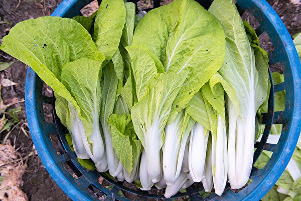 购买小白菜时,最好选有被虫咬过的痕迹,农药会少一点。(Shutterstock)