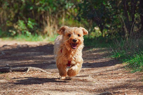 義大利忠狗每天獨自走3公里 到墳前陪主人