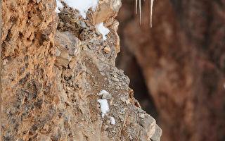 视力测验?稀有雪豹在裸露山脊中完全隐形
