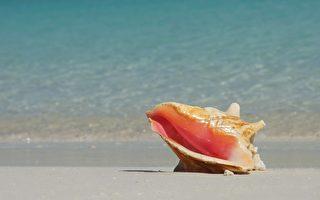 泰贫女在海螺发现珍珠 罹癌母亲医药费有望