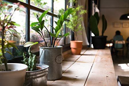 盆花, 盆栽, 室内植物