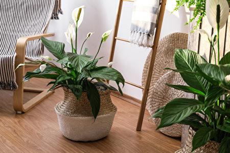 盆花, 室内植物