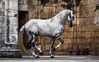 鍾愛駿馬 女攝影師走遍世界捕捉良駒的高貴美