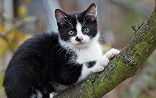 猫咪受困15米树梢 树医30秒攀高成功救援
