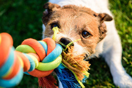pet toy,Shutterstock,dog,狗玩具