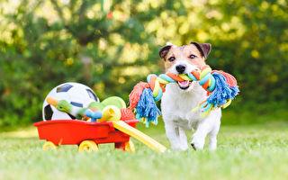 「主人不在好無聊」3大寵物玩具解析