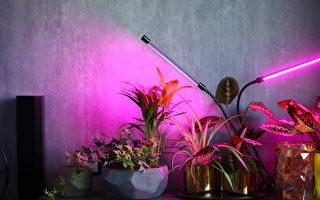 為室內植物補充光照 植物生長燈介紹