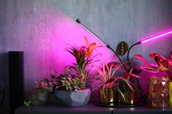 为室内植物补充光照 植物生长灯介绍