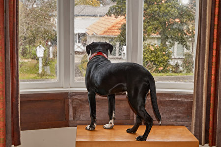 pet toy,Shutterstock,dog,狗玩具,窗戶