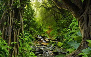 瘋子變戰士 印尼老農24年心血將荒山變綠洲