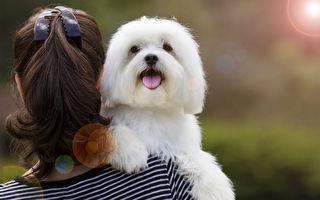 专家曝中小型犬更长寿 它们能陪你更久