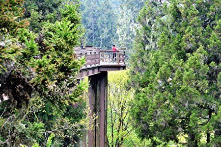 阿里山森林遊樂園,沼平公園的天空步道。