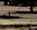 舊金山170年以來 連續2年旱情第二嚴重