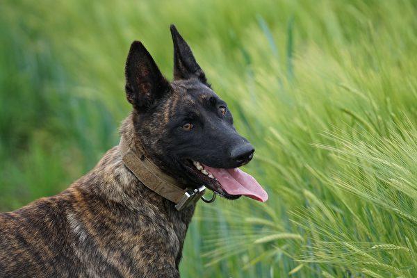 警犬制服殺人嫌犯 佛州警方讚其一向忠勇