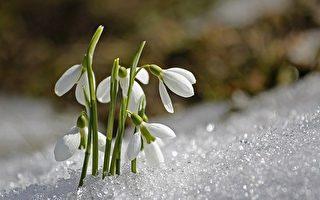 新詩:春誕的種子
