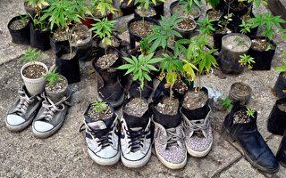 反大麻家长组织呼吁纽约修改法律