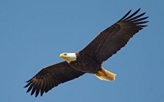 新詩:思想者的隱形翅膀