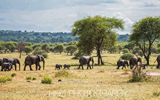 走進非洲(1)作客野生動物家園