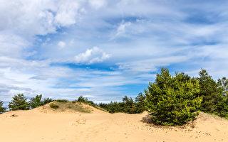 村民用古老植樹法 四十年使沙漠變森林