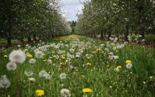 杂草太多? 与野草共生的管理法 作物更健康
