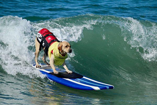 美國佛州舉辦小狗衝浪比賽 成復活節傳統