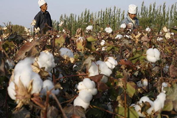 迫于国际压力 三中国供应商停用新疆劳工