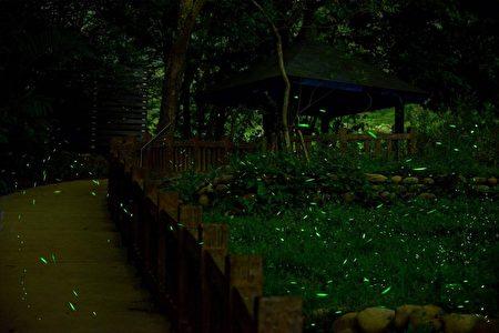 进入四月赏萤季节,大坑生态园区萤火虫现踪了!