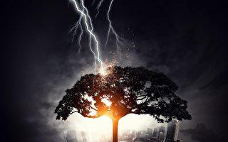 精準無比 閃電擊碎美國威州高中的一棵樹