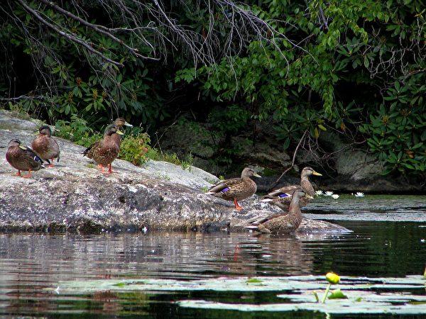 瓦瓦丹達奇觀州立公園