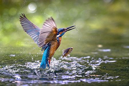 讓新竹縣長楊文科驚豔的作品「翠鳥」。